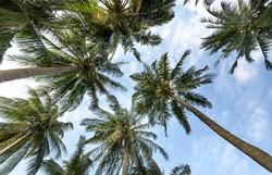 Projeto Guapiaçu lança trilha virtual na Semana do Meio Ambiente (Foto: Pixabay / Reprodução)
