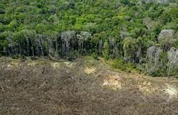 Brasil admite que não cumprirá meta de redução do desmatamento (Foto: FLORIAN PLAUCHEUR / AFP)