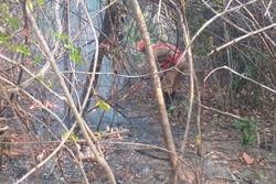 Chuva ajuda a apagar incêndios na Chapada dos Veadeiros (Foto: Reprodução)