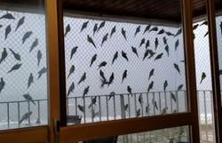 Após derrubada de árvores, aves se abrigam na tela de apartamento em Ilhéus (Foto: Reprodução/Redes Sociais)