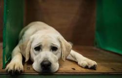 Cada ano na vida dos cães equivale a 30 anos dos seres humanos, diz estudo (Foto: AFP / OLI SCARFF)
