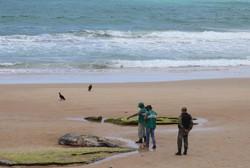 Carcaça de baleia jubarte é encontrada na praia de Enseada dos Corais (Foto: João Barbosa/SECOM Cabo de Santo Agostinho)