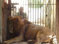 Leão do Parque de Dois Irmãos morre por complicações do câncer (Fotos: Lu Rocha/ Semas-PE e Acervo pessoal de Dênisson Souza)