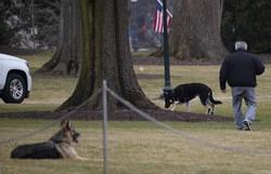 Major e Champ: cachorros de Biden se mudam para a Casa Branca (Foto: JIM WATSON/AFP)