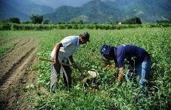 Câmara aprova medidas de auxílio a agricultores familiares