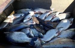 Comunidades pesqueiras sofrem duplas consequências em menos de um ano (Foto: Conselho Pastoral da Pesca / Divulgação)