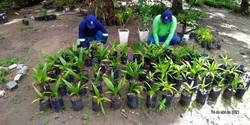 Olinda cultiva 7 mil mudas para utilizar em parques e praças da cidade (Secom Olinda/Divulgação)