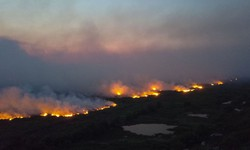Pantanal pode levar até 50 anos para se recuperar de queimadas (Foto: Chico-Ribeiro / Governo do Mato Grosso )