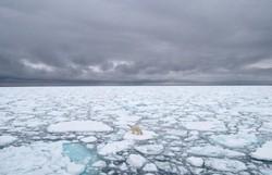 Superfície de gelo do Ártico registra menor nível para o mês outubro (Foto: BJ KIRSCHHOFFER / POLAR BEARS INTERNATIONAL / AFP)