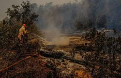 Comissão quer convocar Salles para falar sobre ações no Pantanal (FOTO: MAYKE TOSCANO/SECOM-MT/DIVULGAÇÃO)