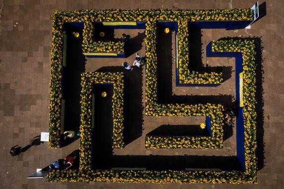 """FOTOS DO DIA - 10 de Setembro 2019 (Um labirinto de girassóis é instalado no Largo da Batata, em Pinheiros, na   zona oeste da cidade de São Paulo, nesta terça-feira, 10, como parte da   campanha """"Na Direção da Vida-Depressão sem Tabu"""". Com 120 metros quadrados   de extensão e quase dois mil girassóis, a instalação abre ao público a   partir desta terça-feira, 10, Dia Mundial de Prevenção do Suicídio, e fica   montada para visitação gratuita até o dia 14 de setembro. As ações fazem   parte do Setembro Amarelo, mês em que se conscientiza sobre a prevenção do   suicídio. Foto: FELIPE RAU/ESTADÃO CONTEÚDO.)"""
