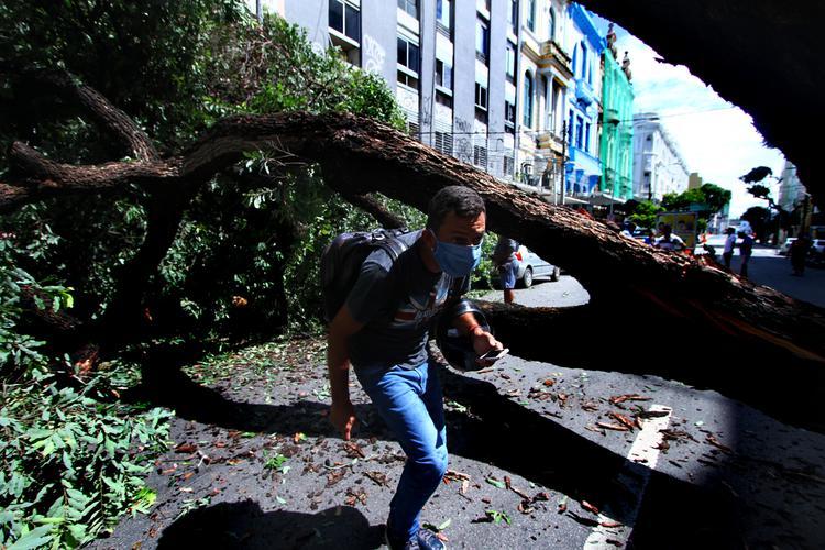 CORONAVÍRUS: Veja as fotos do dia 27 de Abril de 2020 (Devido as fortes chuvas que atingiram a madrugada desta segunda-feira (27), na Região Metropolitana no Recife, uma arvore caiu e atingiu uma moto, interditando a Avenida Marques de Olinda, no Recife Antigo. Foto: Peu Ricardo / DP FOTO)