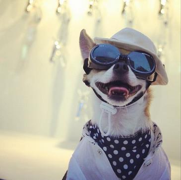 Cahorro fashionista é sucesso no Instagram (Reprodução do Instagram)