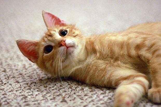 Nos gatos, a região mais afetada é perto os bigodes (Flickr/Divulgação)