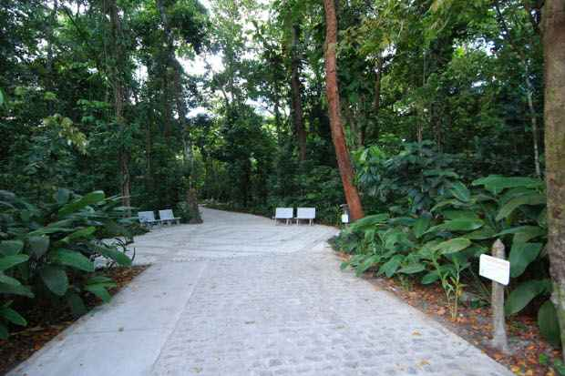 Jardim Botânico tem trilhas de baixa dificuldade. Foto: Ricardo Fernandes/DP/D.A Press