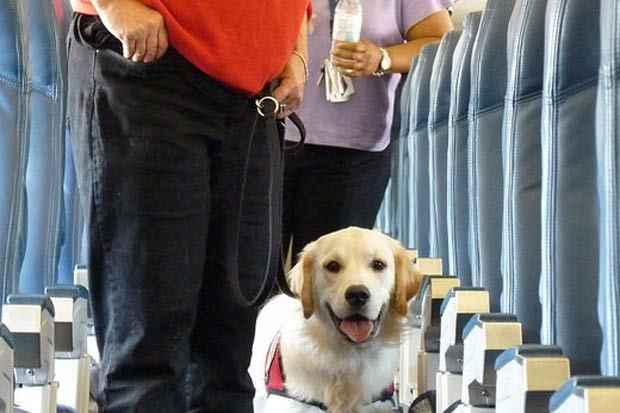 Transporte de animais passa a ser permitido nas duas companhias em voos domésticos. Foto. Can do Canines/Flickr/Reprodução