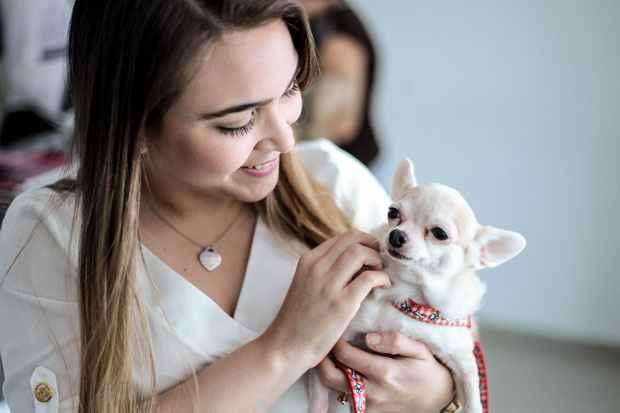 A Chiuaua Violeta controlou sua doença após o uso de remédios especializados. Foto: Arquivo Pessoal