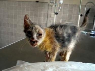 Menina salva gato do lixo, cuida dele e animal se recupera (Foto: YouTube/Reprodução)
