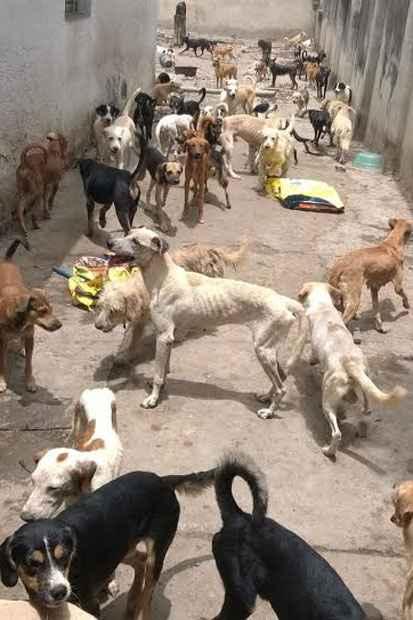 Animais estão doentes, desnutridos e sozinhos na casa. Foto: Sidney Niceas/Projeto Mascote de Rua/Divulgação