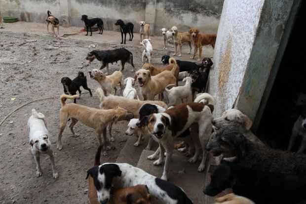 Cinco cães que estavam na casa da Encruzilhada estarão disponíveis para adoção no Parque de Exposição. Foto: Julio Jacobina/DP/D.A Press