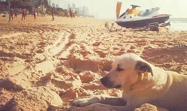 Cachorro ganhou seu nome por seguir jet skis usados em operações. Foto: Bombeiros/ Divulgação