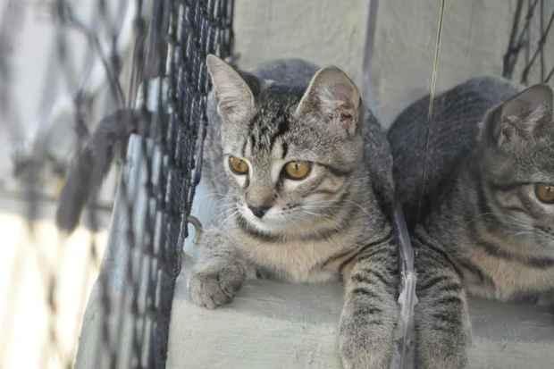 Cães e gatos do Projeto Patinha de Aldeia e da Casa da Avenida Norte estarão disponíveis. (Foto: Projeto Patinha de Aldeia/Divulgação)
