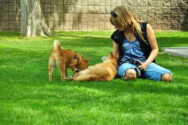 A ocitocina, liberada no relacionamento entre cachorros e humanos, é um neurotransmissor responsável pela formação de vínculos de sociais. Foto: Taro the Shiba Inu/Flickr