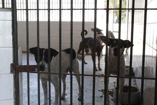 Cerca de  20 gatos e 60 cachorros estão aptos para receber uma nova família no Centro de Vigilância Ambiental. Foto: Rodrigo Silva/Esp.DP/D.A Press