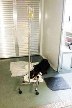 Animal estaria debilitado e foi atendido por plantonistas da UPA. Foto: Arquivo Pessoal