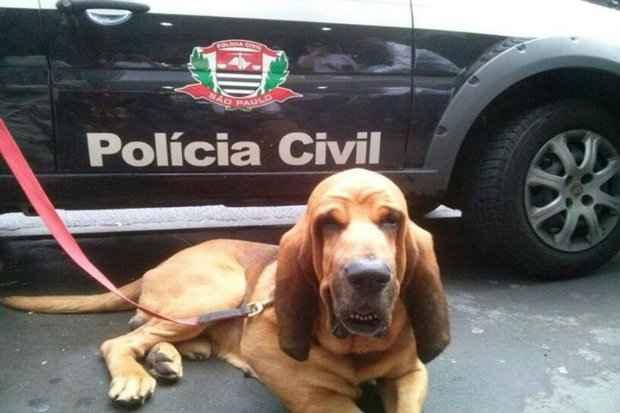 (Foto: Nelo Rodolfo/Divulgação)