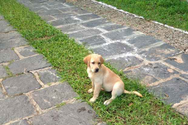 A cadelinha Linda desapareceu há quatro meses de um terreno no Alto da Sé, em Olinda. Foto: Arquivo Pessoal