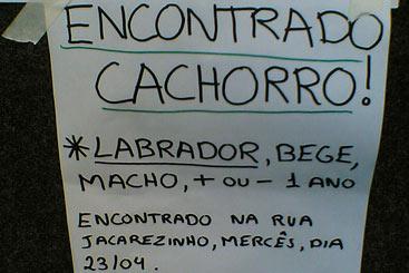 Cartazes comunicam o desaparecimento (e o aparecimento) do pet. Foto: Flickr/Reprodução