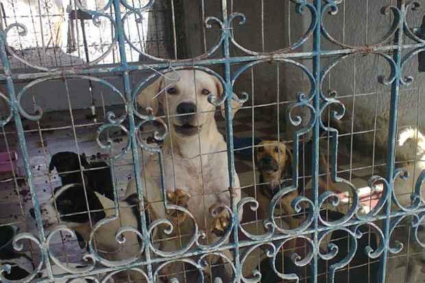 A casa abandonada abrigava 137 cachorros, que estavam doentes, desnutridos e sozinhos antes de serem acolhidos pelas instituições de apoio aos animais. Foto: Projeto Mascote de Rua/Divulgação