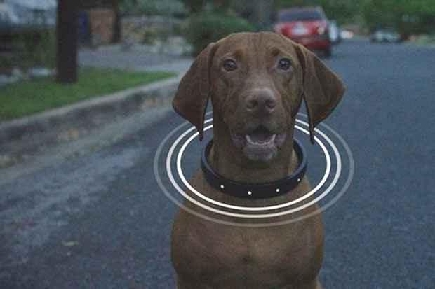 Aparelho pode trabalhar integrado com um smartphone. Foto: DogTelligent/Reprodução