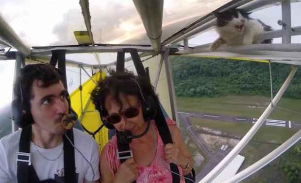 Gato se escondeu na asa antes do ultraleve decolar, assustando os tripulantes. (Foto: Reprodução/YouTube)