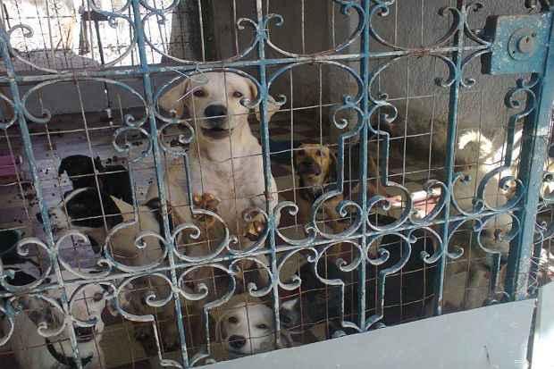 Sete animais ainda esperam pela chance de oferecer amor aos futuros tutores. Foto: Divulgação/ Facebook/ Mascote de Rua
