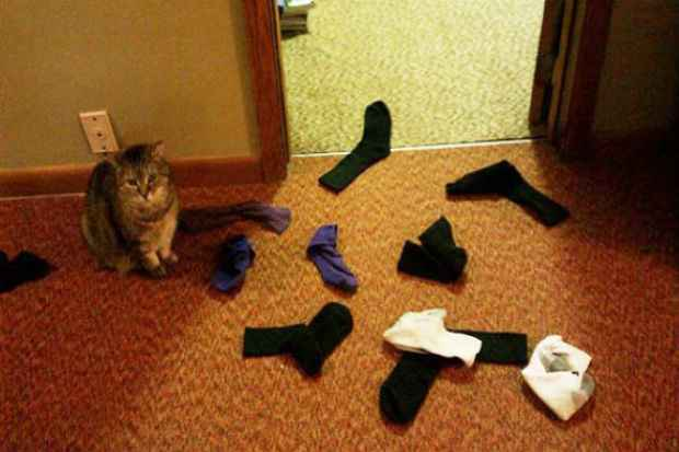 O hábito de colecionar do gato pode ser passagueiro. Foto: Reprodução