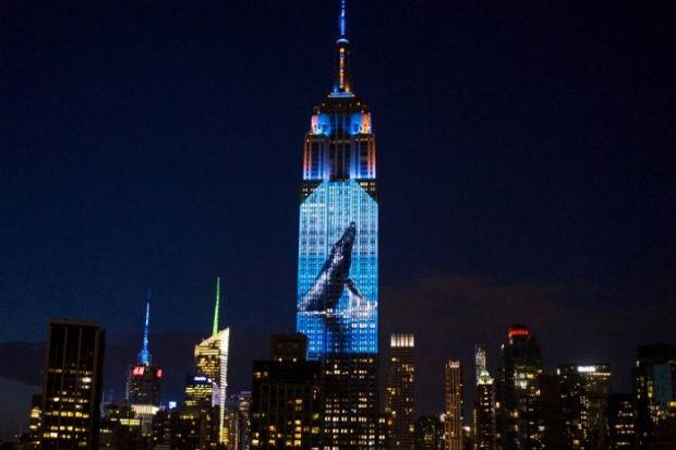 A ONG Oceanic Preservation Society (OPS) projetou no lado sul do edifício, com cerca de 40 projetores, imagens de espécies em risco. Foto: Reprodução/ Empire State Building