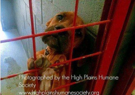 Mesmo a foto tendo sido tirada por coincidencia, a impressão é que a cadela sabia que se não fosse adotada seria eutanasiada. Foto: Reprodução/ Facebook/ ONG High Plains Humane Society