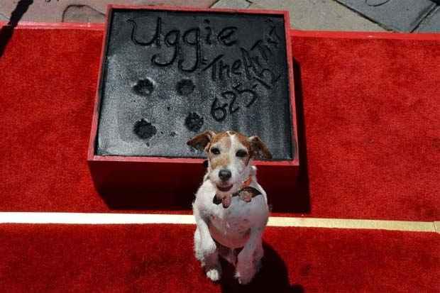 Uggie foi cotado até para concorrer ao Oscar. Foto: Robyn Beck/AFP