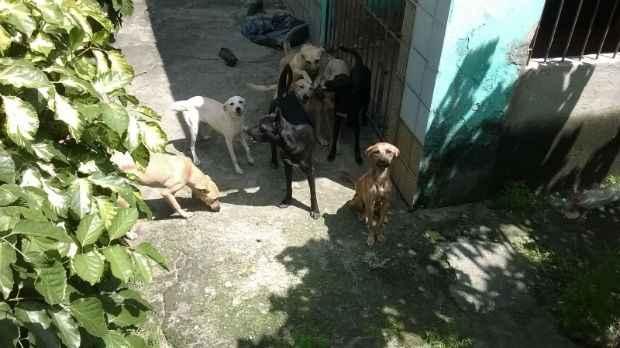 Donos passariam dias sem ir ao local, segundo vizinhos. Foto: Anônimo/WhatsApp do Diario