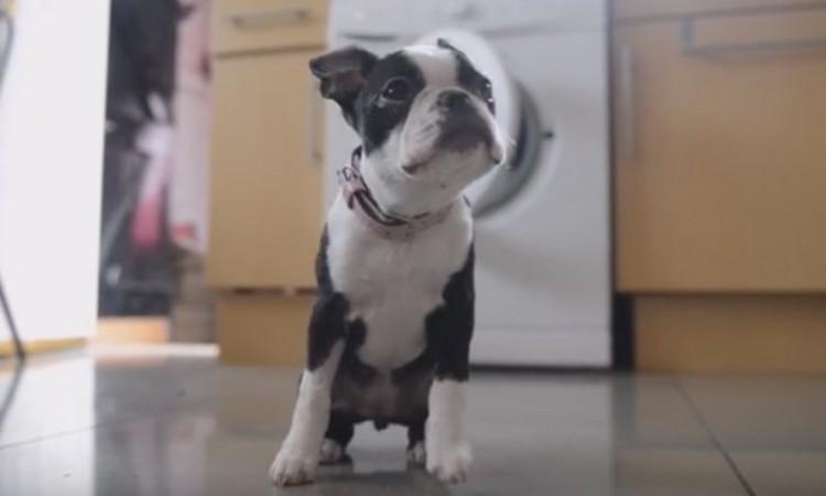 A cadelinha foi encontrada com vida mas debilitada dentro da máquina.Foto: Reprodução/ Youtube