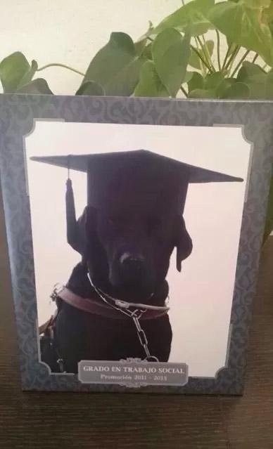 A cadela ganhou até uma placa personalizada. Foto: Juan C. Ramos Picchie/Reprodução/Twitter