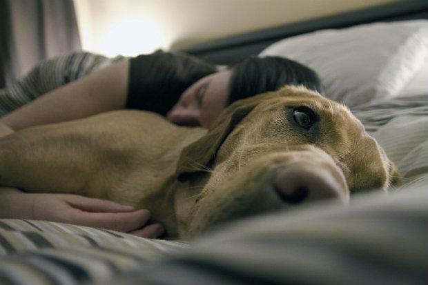 Pets também podem sofrer de câncer de mama. (Foto: Domínio público)