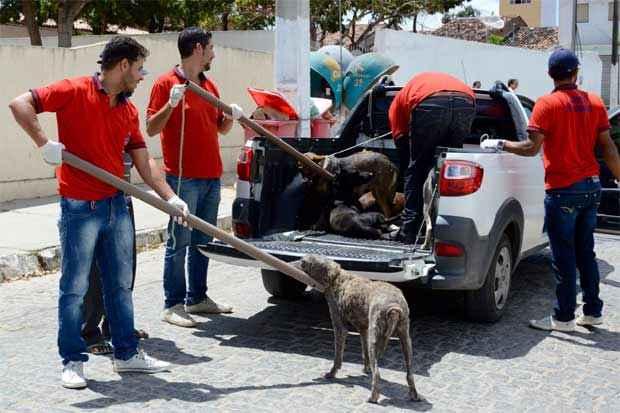 Os cães recolhidos são levados para o Canil Municipal, onde são higienizados e alimentados com acompanhamento veterinário. Foto: Divulgação