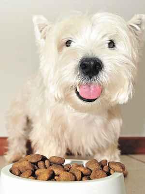 Escolha da ração deve levar em conta tamanho e idade do seu cãozinho (Marcelo Ferreira/CB/D.A Press)