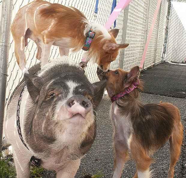 Família pouco convencional aguarda alguém que os adote. (Foto: Animal Rescue League/Reprodução)