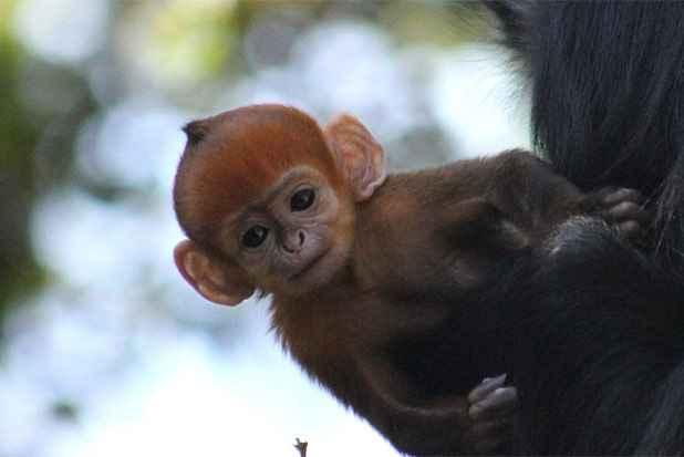Foto: Zoológico Taronga/Reprodução