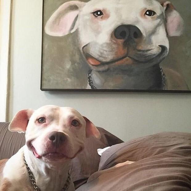 """Cachorrinho virou """"celebridade instantânea"""" ao ter foto postada na internet. (Foto: Reprodução/Imgur)"""