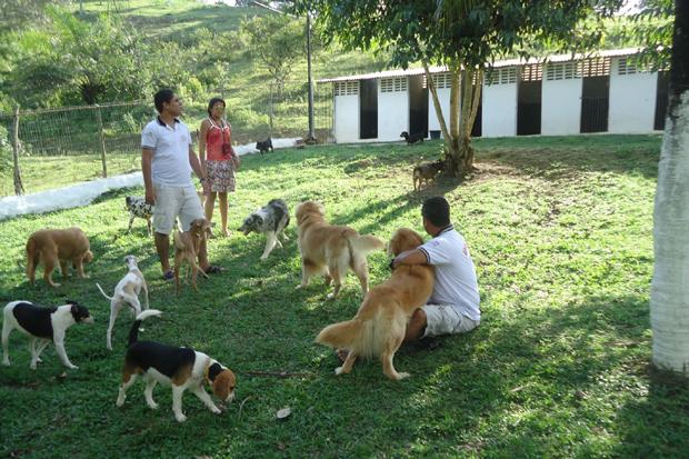 Pet passa por intensas atividades físicas e recreativas realizadas no lugar onde estão hospedados (Caninos Adestramento)